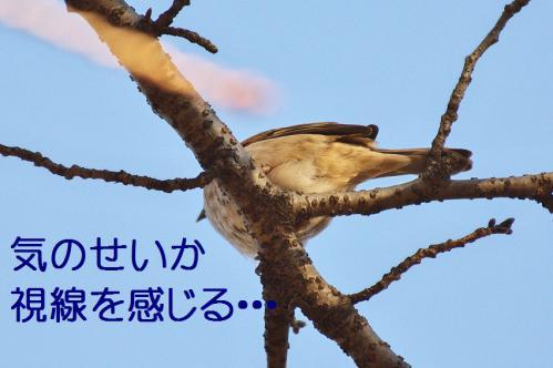 020_20121214214649.jpg