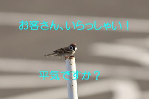 020_20121217024258.jpg