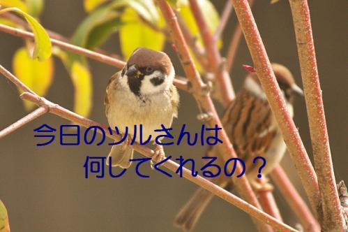020_20121218215456.jpg
