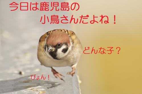020_20121220193325.jpg