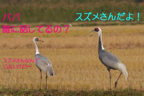 020_20121221214625.jpg