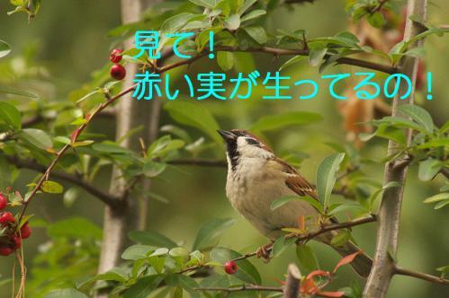 020_20121225223019.jpg