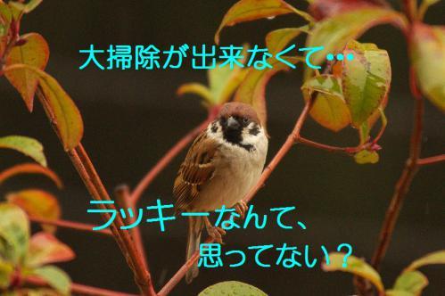 020_20121230221111.jpg
