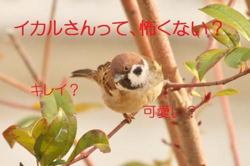 020_20130121215238.jpg