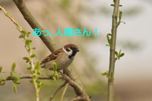 030_20120426195237.jpg