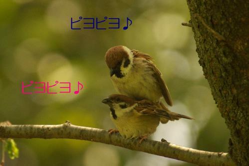 030_20120430195426.jpg