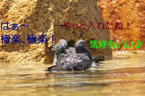 030_20120501203819.jpg