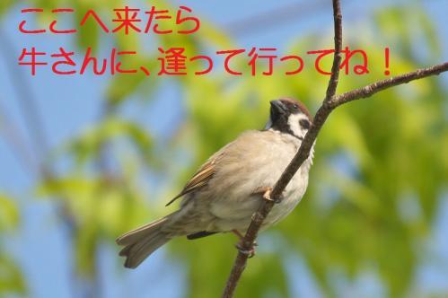 030_20120513225402.jpg