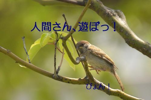 030_20120531224808.jpg