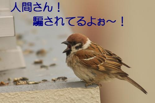 030_20120611231604.jpg