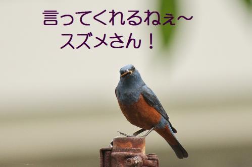 030_20120612214928.jpg