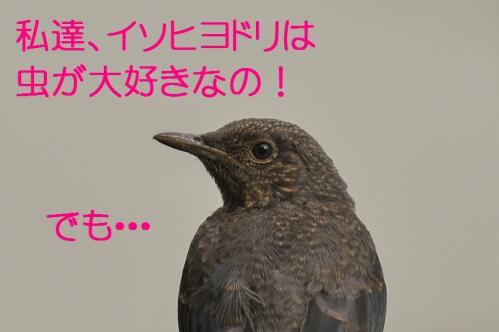 030_20120613233500.jpg