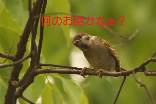 030_20120630222337.jpg