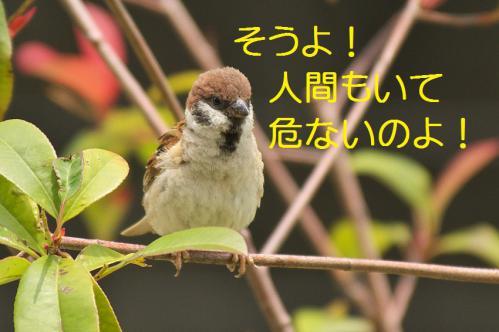 030_20120711222458.jpg