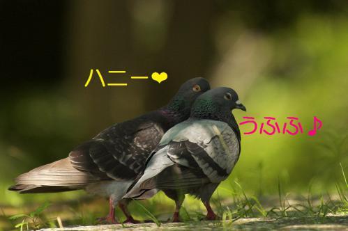 030_20120731204344.jpg