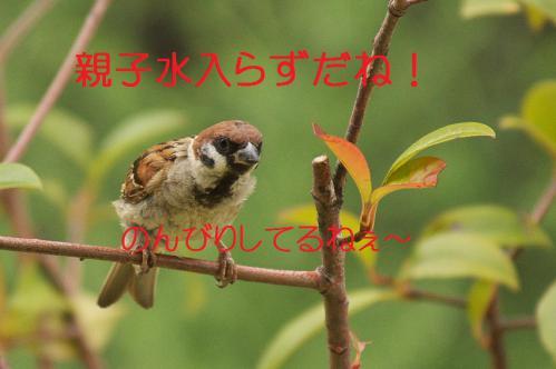 030_20120822221731.jpg