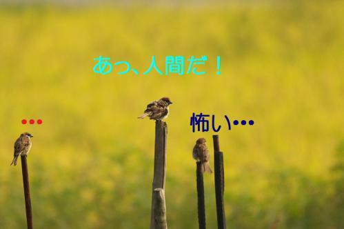 030_20120904224403.jpg