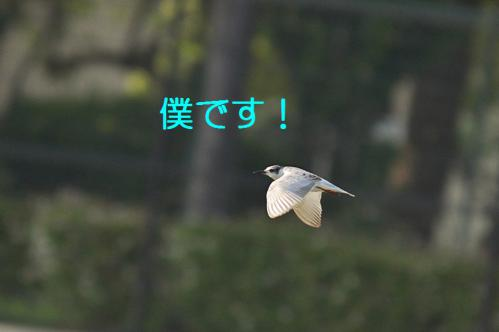 030_20121009191351.jpg