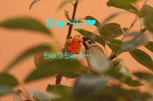 030_20121030223100.jpg