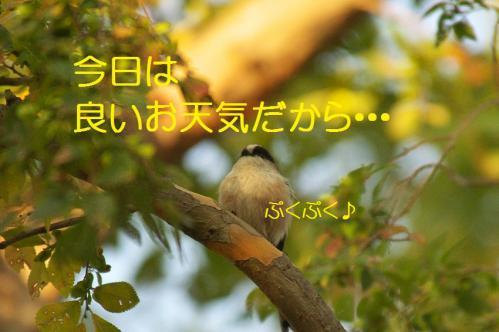 030_20121031214756.jpg