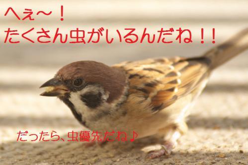 030_20121102220018.jpg