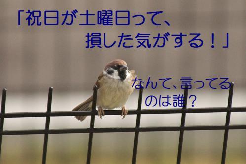 030_20121103224650.jpg