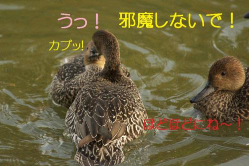 030_20121112215141.jpg