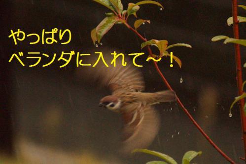 030_20121117212452.jpg