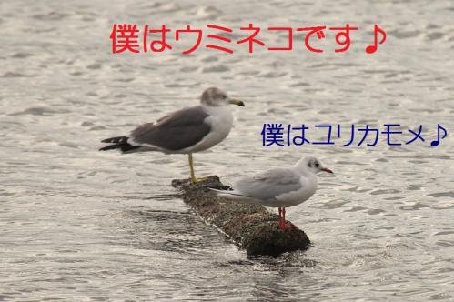 030_20121124215256.jpg