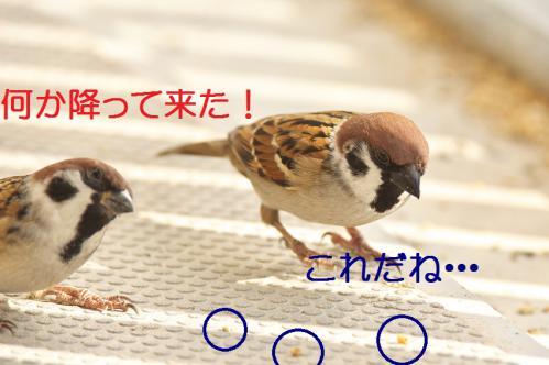 030_20121125192037.jpg