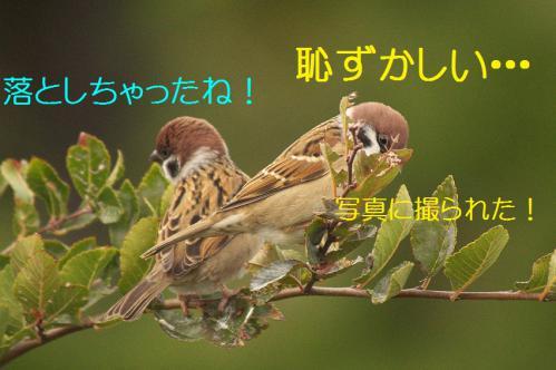 030_20121126222954.jpg