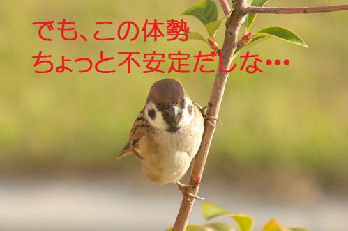 030_20121130220423.jpg