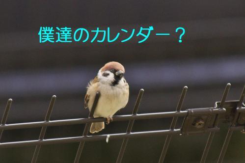 030_20121201214702.jpg