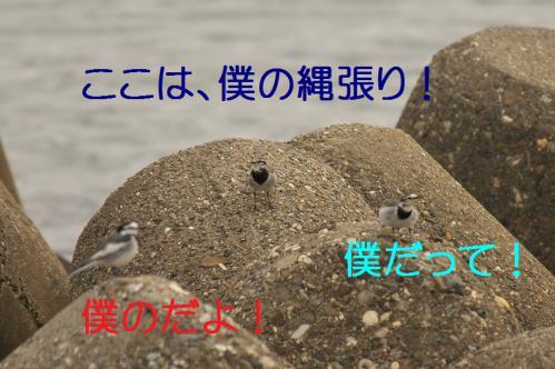 030_20121205220911.jpg