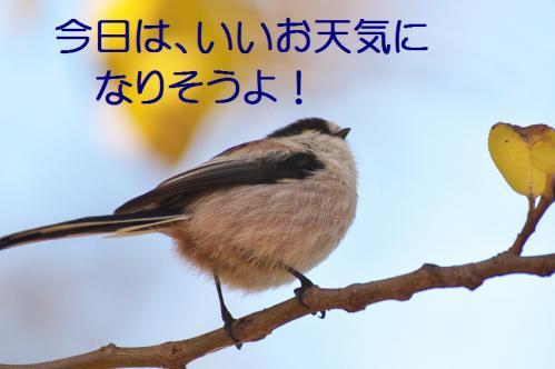 030_20121206193319.jpg