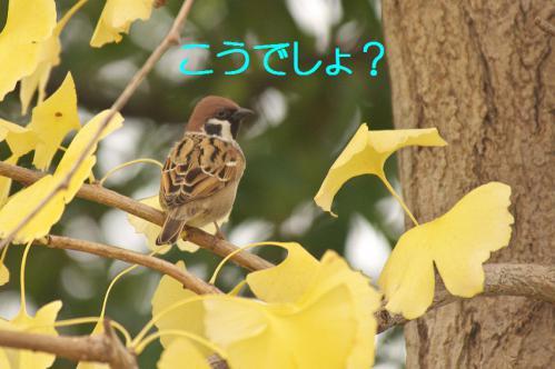 030_20121206230415.jpg