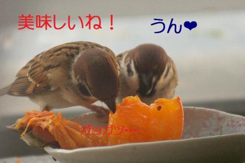 030_20121212214421.jpg