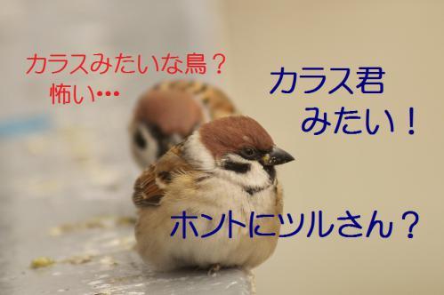 030_20121215195931.jpg