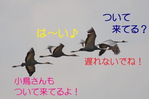 030_20121216202643.jpg