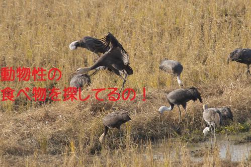 030_20121218215500.jpg