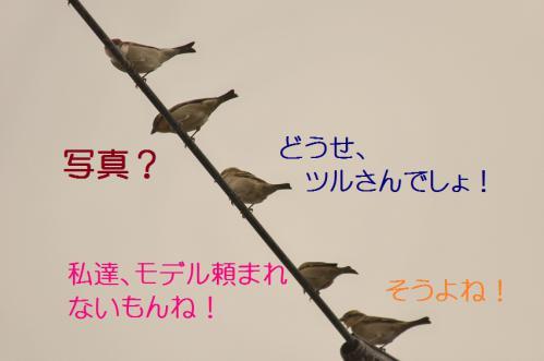 030_20121221214627.jpg