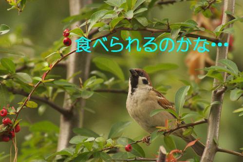 030_20121225223022.jpg