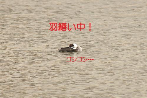 030_20121227213451.jpg