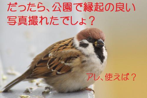 030_20121228215047.jpg