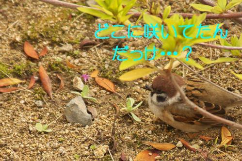 030_20121229231630.jpg