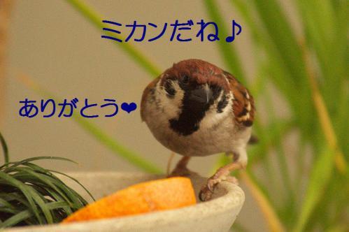 030_20121230221115.jpg