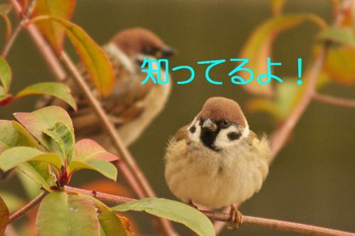 030_20130105210945.jpg