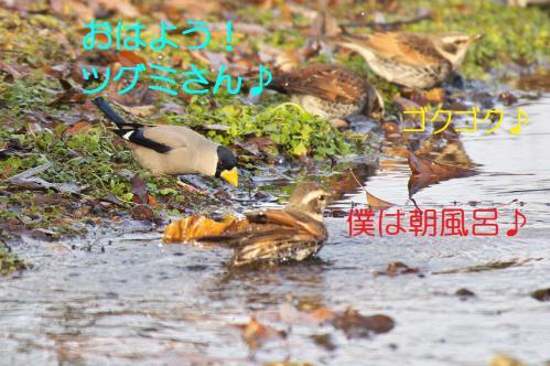 030_20130121215242.jpg