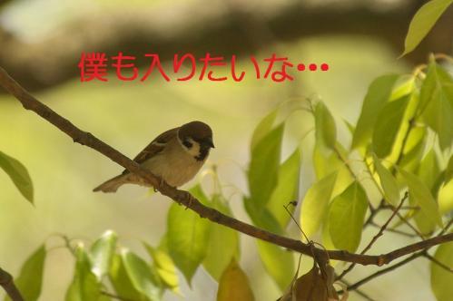 035_20120501203818.jpg