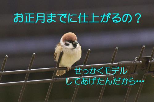 035_20121201214705.jpg